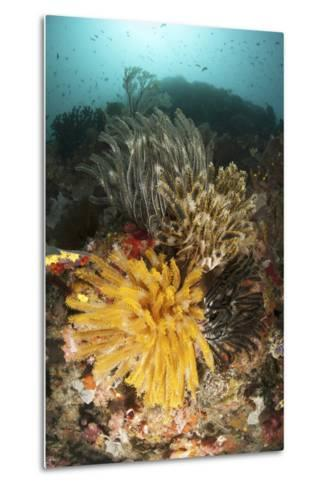 A Colorful Komodo Seascape with Crinoids, Indonesia-Stocktrek Images-Metal Print