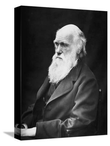 Portrait of Naturalist and Geologist Charles Darwin-Stocktrek Images-Stretched Canvas Print