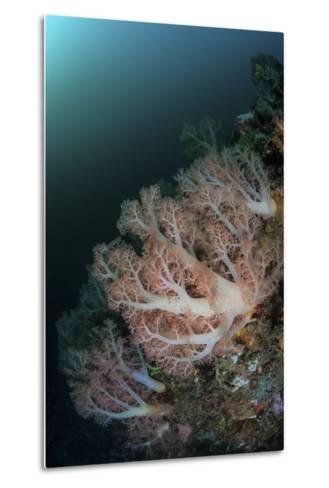 Beautiful Soft Corals Grow on a Deep Reef in Indonesia-Stocktrek Images-Metal Print