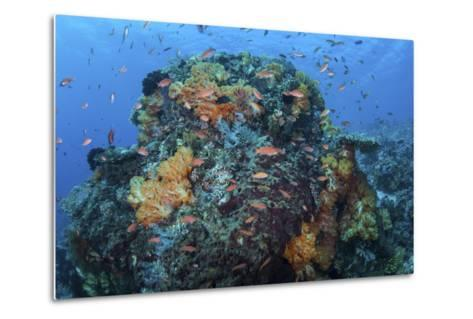 A Colorful, Healthy Coral Reef Thrives in Indonesia-Stocktrek Images-Metal Print