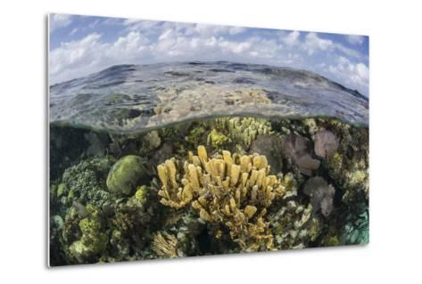 Gorgonians and Reef-Building Corals Near the Blue Hole in Belize-Stocktrek Images-Metal Print