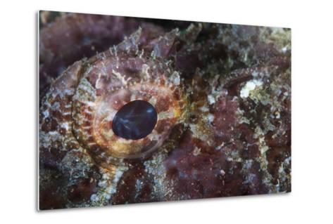 Detail of the Eye of a Scorpionfish-Stocktrek Images-Metal Print