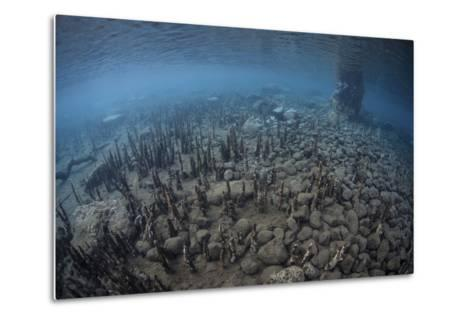 Mangrove Roots Rise from the Seafloor of an Island in Indonesia-Stocktrek Images-Metal Print
