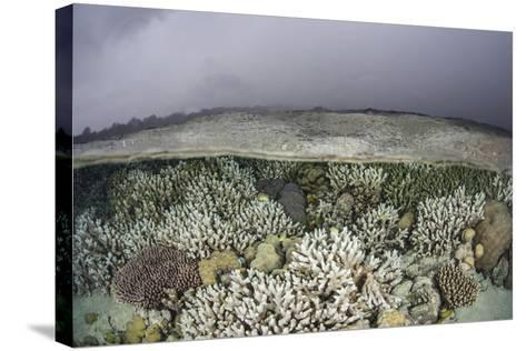 A Fragile Coral Reef Grows in Shallow Water in the Solomon Islands-Stocktrek Images-Stretched Canvas Print