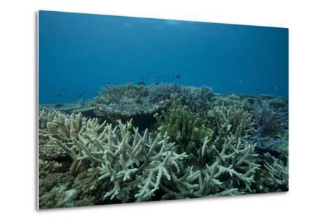 Healthy Corals Cover a Reef in Beqa Lagoon, Fiji-Stocktrek Images-Metal Print
