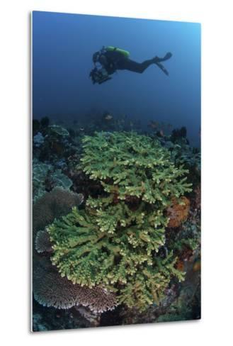 A Diver Swims Above a Healthy Coral Reef in Indonesia-Stocktrek Images-Metal Print