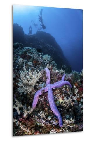 A Purple Sea Star Clings to a Diverse Reef Near the Island of Bangka, Indonesia-Stocktrek Images-Metal Print