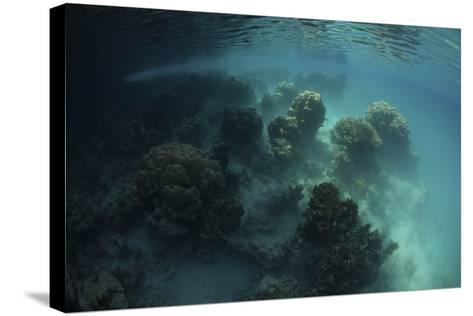 Strange Coral Growth in a Lake in Palau-Stocktrek Images-Stretched Canvas Print