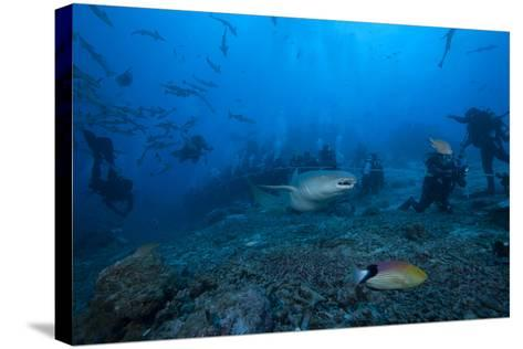 A Large Tawny Nurse Shark Swims Past Divers at the Bistro Dive Site in Fiji-Stocktrek Images-Stretched Canvas Print