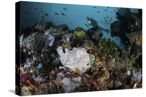 A Giant Frogfish Blends into its Reef Surroundings in Indonesia-Stocktrek Images-Stretched Canvas Print