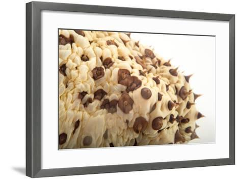 A Chocolate Chip Cucumber, Isostychopus Badonotus.-Joel Sartore-Framed Art Print