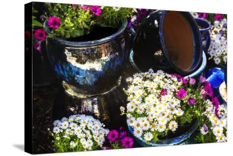 Glazed Flower Pots I-Alan Hausenflock-Stretched Canvas Print