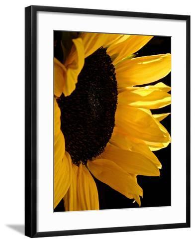Sunlit Sunflowers II-Monika Burkhart-Framed Art Print