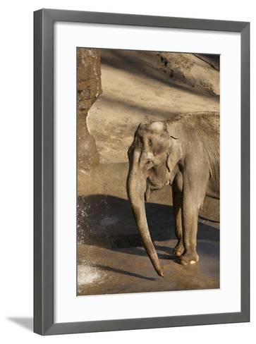 Elephant-Karyn Millet-Framed Art Print