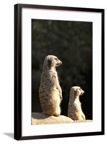 Meerkats-Karyn Millet-Framed Art Print