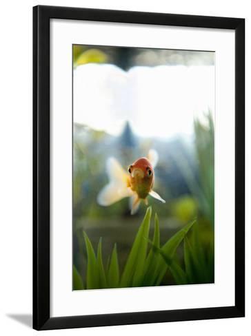 Goldfish I-Karyn Millet-Framed Art Print