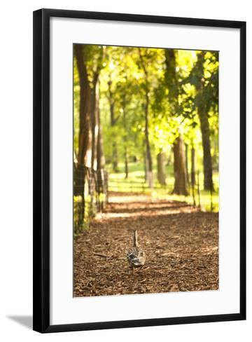 Duck Walk-Karyn Millet-Framed Art Print