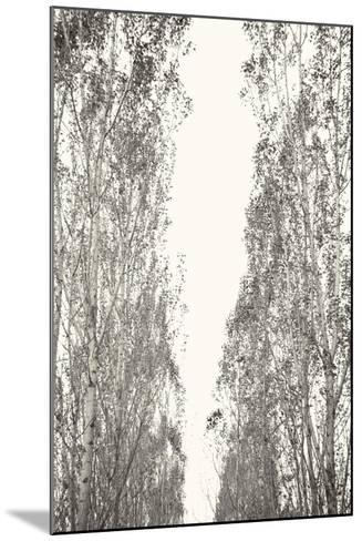 Trees III-Karyn Millet-Mounted Photographic Print