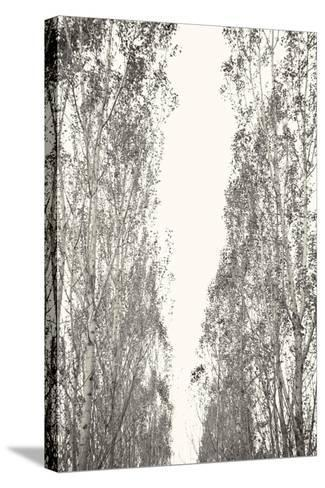 Trees III-Karyn Millet-Stretched Canvas Print