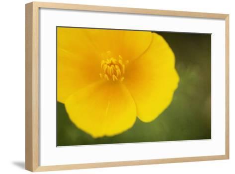 California Poppy-Roberta Murray-Framed Art Print