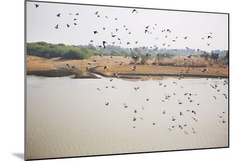 Birds I-Karyn Millet-Mounted Photographic Print
