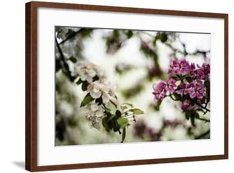 Spring Blossoms VI-Beth Wold-Framed Art Print