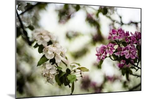Spring Blossoms VI-Beth Wold-Mounted Photographic Print