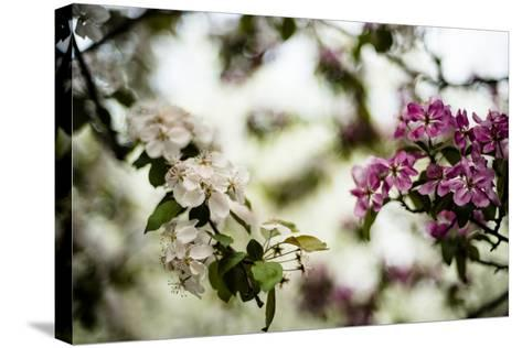 Spring Blossoms VI-Beth Wold-Stretched Canvas Print
