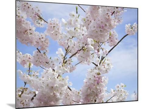 Spring Blossoms-George Johnson-Mounted Photographic Print