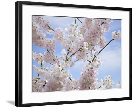 Spring Blossoms-George Johnson-Framed Art Print