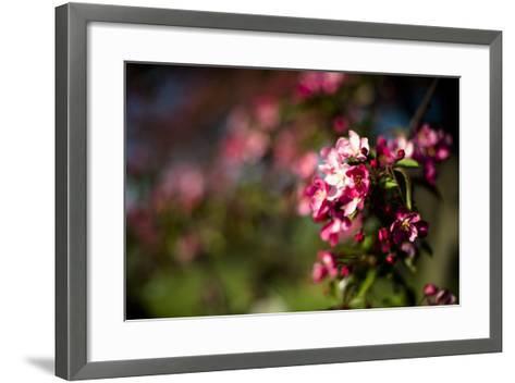 Crabapple Blooms-Beth Wold-Framed Art Print