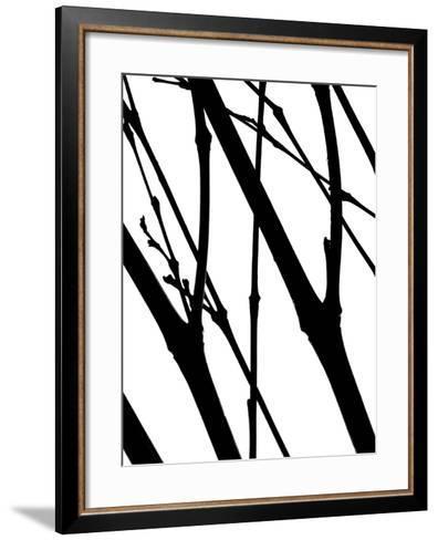 Branch Silhouette I-Monika Burkhart-Framed Art Print