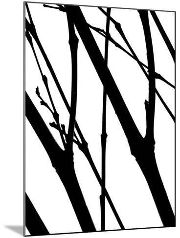 Branch Silhouette I-Monika Burkhart-Mounted Photographic Print
