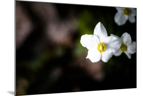 White Petals II-Beth Wold-Mounted Photographic Print
