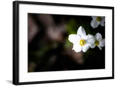 White Petals II-Beth Wold-Framed Art Print