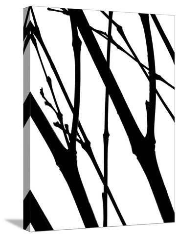Branch Silhouette I-Monika Burkhart-Stretched Canvas Print