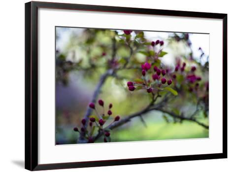 Crabapple Buds-Beth Wold-Framed Art Print