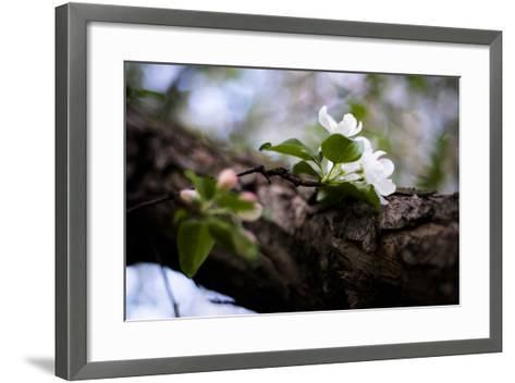 Crabapple Branch II-Beth Wold-Framed Art Print