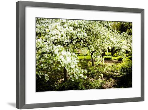 Crabapple in Spring II-Beth Wold-Framed Art Print