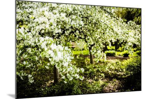 Crabapple in Spring II-Beth Wold-Mounted Photographic Print