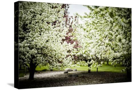 Crabapple in Spring I-Beth Wold-Stretched Canvas Print