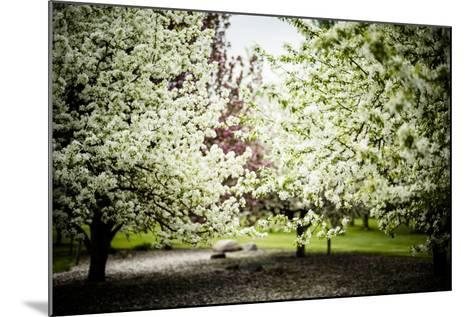 Crabapple in Spring I-Beth Wold-Mounted Photographic Print