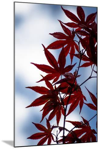 Maple Leaves-Beth Wold-Mounted Photographic Print