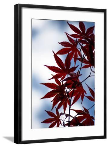 Maple Leaves-Beth Wold-Framed Art Print