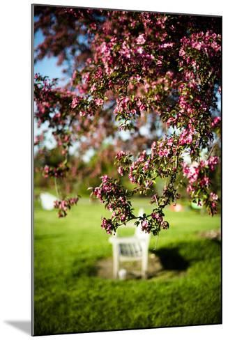 Spring Bench II-Beth Wold-Mounted Photographic Print
