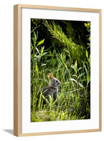 Baby Bunny I-Beth Wold-Framed Art Print