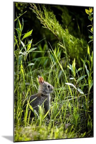 Baby Bunny I-Beth Wold-Mounted Photographic Print