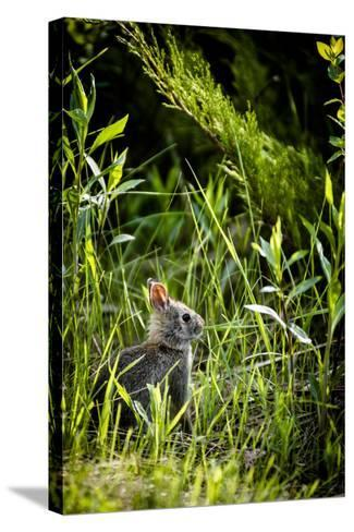 Baby Bunny I-Beth Wold-Stretched Canvas Print