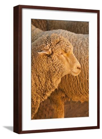 Sheep-Karyn Millet-Framed Art Print