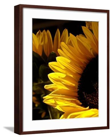 Sunlit Sunflowers I-Monika Burkhart-Framed Art Print